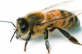 Kribbel krabbel - die bedrohte Welt der Insekten